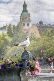 galeri_stockholm22